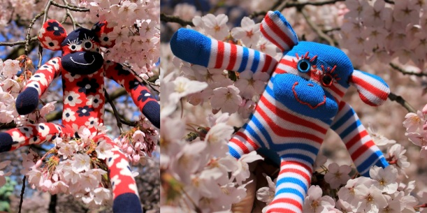 Sock Monkey Lucio (left) and Mini Monkey Klaus enjoying the blossoms.