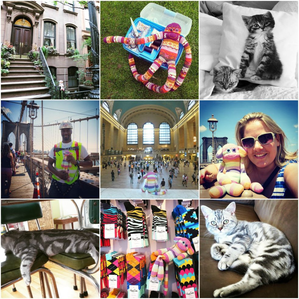 Instagram, round up, july, hamburg, germany, gus and ollie, sock monkey, sock game, photography, socks, cat, kitten, british shorthair, expat, travel, abrouad, new york.