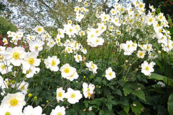 flowers, blooms, hamburg, germany, botanical gardens, gus and ollie